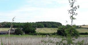 Ansicht über Ackerland zum Holz Lizenzfreie Stockfotografie