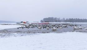 Ansicht über aufgefangene Vögel und Boote auf gefrorenem Fluss Donau Stockbilder