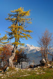 Ansicht über Berge Stockbilder