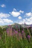 Ansicht über Berge und Veilchen blüht Fireweed auf Hintergrund des blauen Himmels Stockfotografie