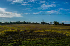 Ansicht über Buckinghamshire-Feld Stockfoto
