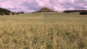 Ansicht über Cicov-Hügel in den tschechischen böhmischen Hochländern, stock footage