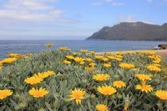 Ansicht über den Flowerbed Lizenzfreie Stockbilder
