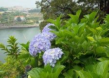 Ansicht über den Fluss von einem botanischen Garten Lizenzfreie Stockfotografie