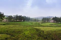 Ansicht über den Kuhbauernhof Stockfotos