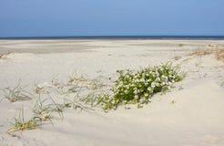 Ansicht über den sandigen Strand Stockbilder