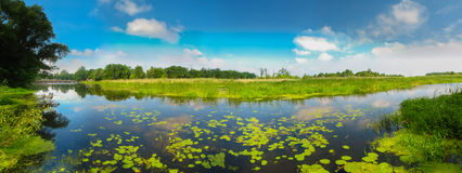 Ansicht über den Sumpf. Lizenzfreies Stockfoto