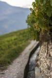 Ansicht über den Weinstock und das it& x27; s-bisse auf dem RhÃ'ne-Tal nahe Sion stockbild