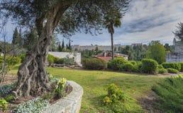 Ansicht über die alte Stadt von Jerusalem von einem schönen allgemeinen Park Lizenzfreies Stockbild