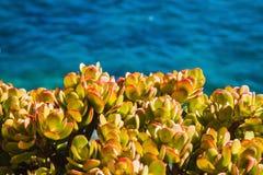 Ansicht über die Küste und das Meer in Costa Brava Tossa De Mrz Stockfoto