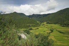 Ansicht über die Reisfelder Stockfotos