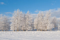 Ansicht über die Winterbäume Stockbild
