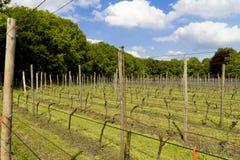 Ansicht über ein niederländisches vinyard umgeben durch Bäume Stockbilder