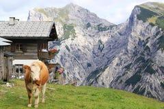 Ansicht über eine Alpe mit einer Kuh im Vordergrund in den Alpen Stockbilder