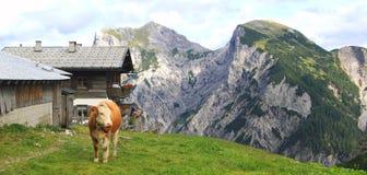 Ansicht über eine Alpe mit einer Kuh im Vordergrund in den Alpen Lizenzfreie Stockbilder