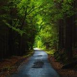 Ansicht über eine gerade Straße im dunklen Holz stockbilder