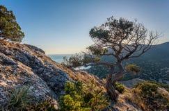 Ansicht über gekrümmten Baum auf steiniger Steigung, Felsen im links, sauberes Blau SK Stockfotos