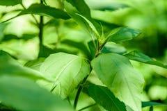Ansicht über Grünblätter unter Sonnenlicht im Wald Stockfotografie