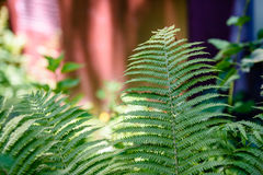 Ansicht über Grünblätter unter Sonnenlicht im Wald Lizenzfreies Stockbild