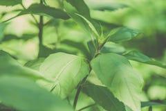 Ansicht über Grünblätter unter Sonnenlicht im Wald - Weinleseklo Lizenzfreies Stockfoto