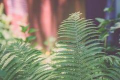 Ansicht über Grünblätter unter Sonnenlicht im Wald - Weinleseklo Stockbild