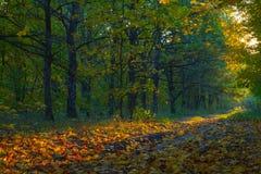 Ansicht über Herbstlandschaft von Bäumen am sonnigen Tag Stockbilder