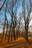 Ansicht über Herbstlandschaft von Bäumen am sonnigen Tag Stockfotos