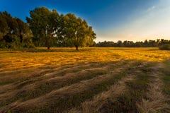 Ansicht über Herbstlandschaft von Bäumen am sonnigen Tag Stockbild