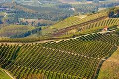 Ansicht über herbstliche Weinberge in Italien Stockbild