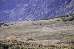 Ansicht über hohe tatras mit Alpenwiese auf dem Vordergrund Lizenzfreie Stockfotografie