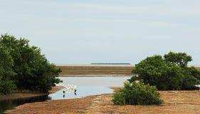 Ansicht über Küste im Sumpfgebiet-Nationalpark lizenzfreie stockfotografie