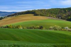 Ansicht über landwirtschaftliche Landschaft mit einem Feld des jungen Mais und des Waldes unter blauem Himmel mit Wolken an einem Stockfotos