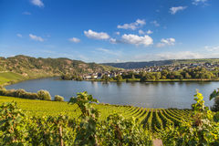 Ansicht über Mosel und Weinberge in Deutschland Piesport Stockfoto
