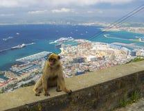 Ansicht über Nordteil von Gibraltar mit Makaken Stockfotografie