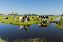 Ansicht über Ransdorp mit Kühen Lizenzfreies Stockfoto