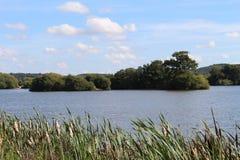 Ansicht über Schilfe zu einem See und zu einer Insel Stockbild