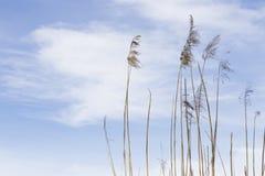 Ansicht über Sumpf bei Sonnenaufgang, während der Frühlingszeit Lizenzfreie Stockfotos