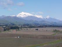 Ansicht über Weinkellereien mit Gebirgszug im Hintergrund stockfoto