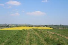 Ansicht abwärts zum Rapsfeld über Ackerland Lizenzfreie Stockbilder