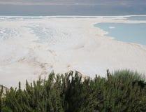Ansicht auf das Tote Meer und die Rosemary-Sträuche Stockbild