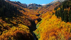 Ansicht Autumn Forest With River stock footage