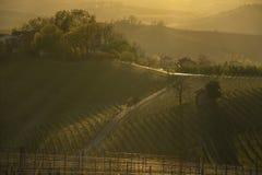 Ansicht bei Sonnenuntergang über den Weinbergen in den Hügeln des Langhe in Piemont Italien lizenzfreie stockbilder