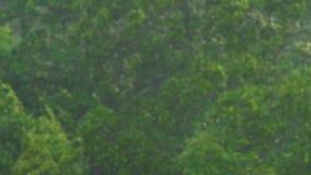 Ansicht ?ber B?ume unter dem starken Regen und dem Wind Sturm im Konzept der n?rdlichen Regionen Hurrikankonzept stock video