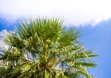 Ansicht bis zum Himmel unter dem Baum Stockfotos