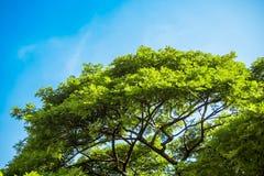 Ansicht bis zum Himmel unter dem Baum Lizenzfreies Stockbild