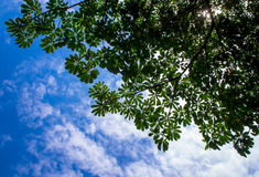 Ansicht bis zum Himmel unter dem Baum Lizenzfreie Stockbilder