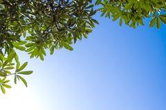Ansicht bis zum Himmel unter dem Baum Stockfotografie