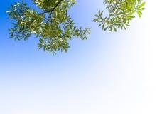 Ansicht bis zum Himmel unter dem Baum Stockbild