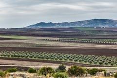 Ansicht an den Landwirtschaftsfeldern Lizenzfreies Stockbild