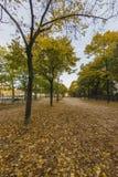 Ansicht in den Park von Paris im Herbst Lizenzfreies Stockbild